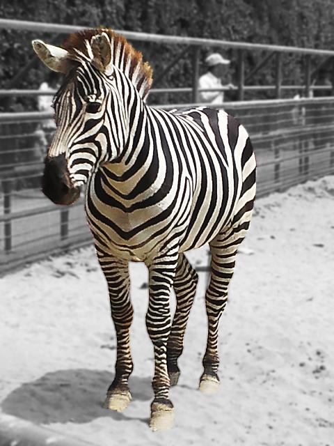 自然 動物園 フェニックス